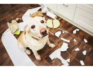 dog making mess